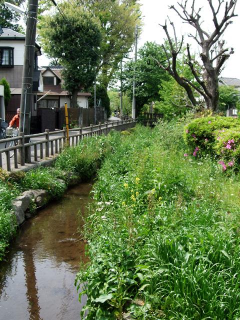 1005_senkawa.jpg