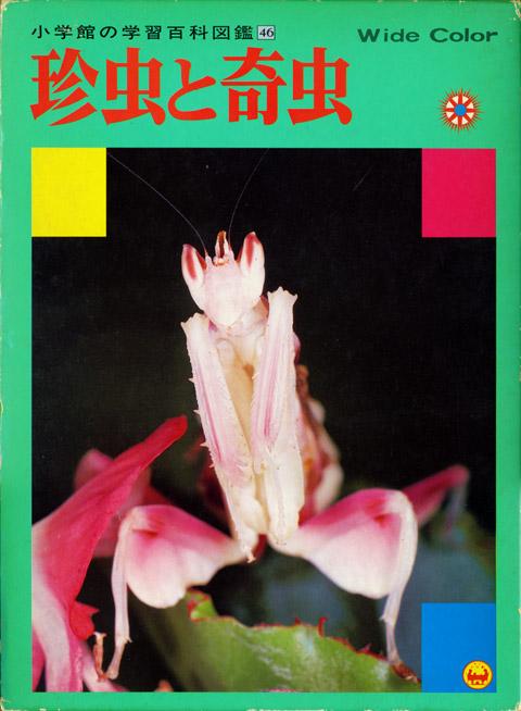 110713_chinchu.jpg